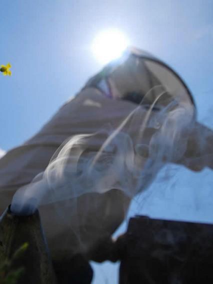 Rauchen der Bienenstock