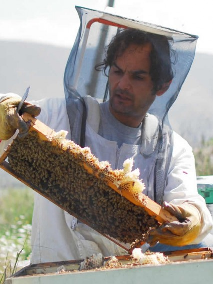 the honey producer while harvesting his bee hives