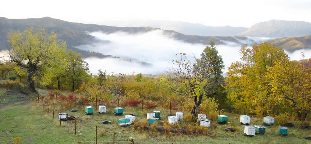 Bee House is a small beekeeping unit located in Tsepelovo village in the Zagorochoria