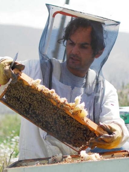 Συλλογή μελιού, ο παραγωγός Μωυσής Σανοζίδης επί τω έργω