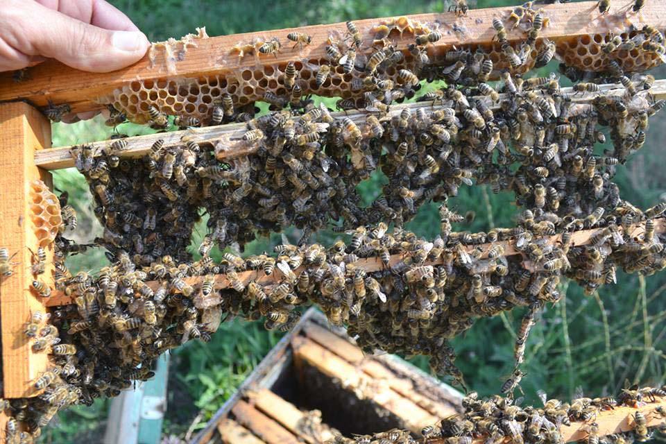 Βασίλισσες, σεμινάριο Μελισσοκομίας για αρχάριους - Ιωάννινα