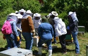 Σεμινάριο μελισσοκομίας στα Ιωάννινα Φωτ. στο μελισσοκομείο στο Τσεπέλοβο