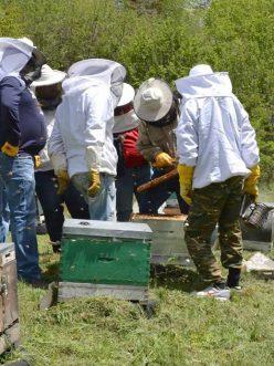 Beekeeping seminar in Tsepelovo