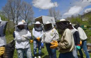 Σεμινάριο Μελισσοκομίας για αρχάριους - Ιωάννινα